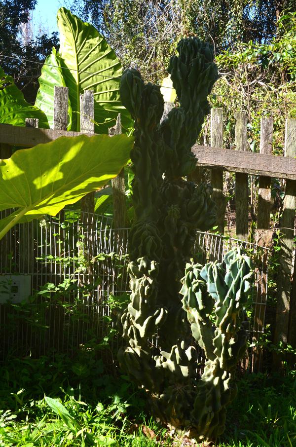 jardim-casa-baunilha2