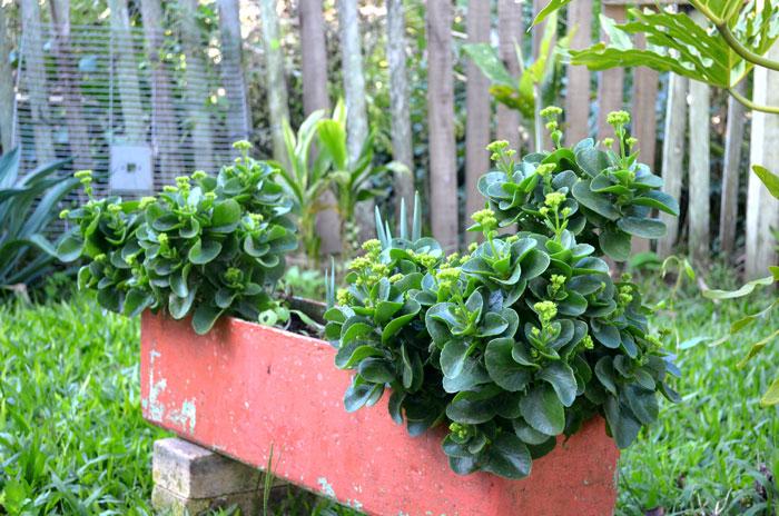 jardim-casa-baunilha9